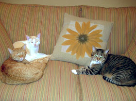 Three Cats on sofa