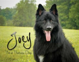 Meet Joey - I'm a therapy dog