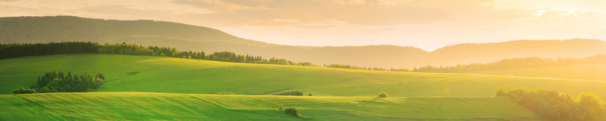 Grassy hill landscape at sunset